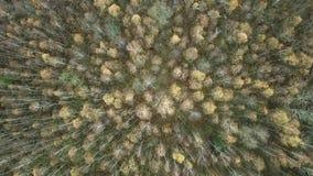 Vlucht over de herfstbos stock video