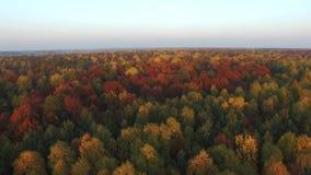 Vlucht over de kronen van kleurrijke bomen, luchtmening stock footage