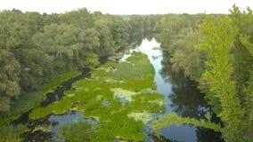 Vlucht over de rivier met gras, de Oekraïne wordt overwoekerd door bomen wordt - het lucht videotaping omringd die stock video