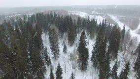 Vlucht over het de winter boslandschap in bewolkt weer met een sneeuwval stock footage