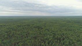 Vlucht over het groene bos stock footage