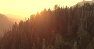 Vlucht over het Sequoia Nationale Park 4K Nov. 2017 stock video