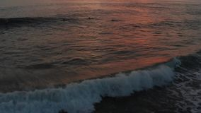 Vlucht over surfers die oceaangolven surfen bij zonsondergang Verbazende zonsondergang lucht oceaanmening Top down van geweven oc stock footage