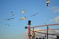 Vlucht van zeemeeuwen over een schip Stock Foto's