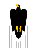 Vlucht van Zwarte Havik Vogelvliegen tot bovenkant van roofdier vlieger Stock Foto's