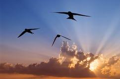 Vlug trio bij zonsondergang Stock Fotografie