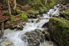 Vlugge waterstroom met watervallen in Mala Fatra NP, Slowakije Stock Foto