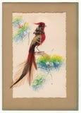 Vntage用羽毛装饰鸟贺卡1910& x27; s 图库摄影