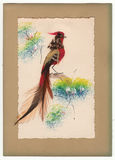 Vntage Feathered Bird Greeting Card 1910's Stock Photography