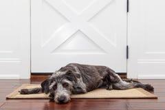 Väntande på ägare för ledsen hund Royaltyfria Foton
