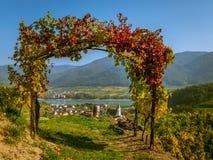Voûte colorée de vin et ciel bleu en automne images stock