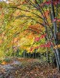 Voûte d'automne photos stock