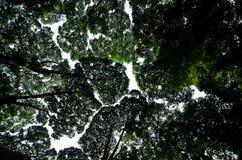 Voûte de forêt Photos stock