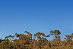 Voûte de forêt Image stock