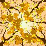 Voûte de forêt - automne Photographie stock libre de droits