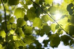 Voûte de forêt ensoleillée Photographie stock