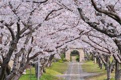 Voûte de Sakura Image libre de droits