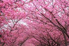 Voûte de Sakura Photographie stock libre de droits