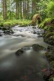 Voûte mystique au-dessus de la rivière dans les bois Photographie stock