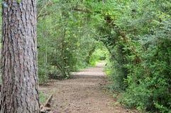 Voûte dans la forêt Photographie stock libre de droits