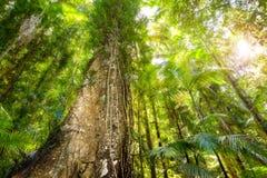 Voûte de forêt dense vue de la terre Images stock