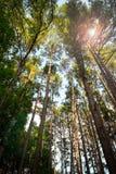 Voûte de forêt dense vue de la terre Image stock