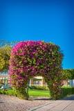 Voûte exotique de bouganvillée de fleurs images stock