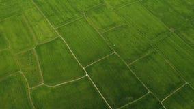Voando pelo zangão sobre os terraços do arroz, lotes de campos verdes Natureza selvagem da metragem da antena de Vietname Eco sau video estoque