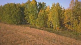 Voando sobre um lindo pássaro no outono Pássaro amarelo na ravina Vista aérea vídeos de arquivo