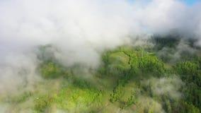 Voando sobre uma floresta tropical surpreendente, vista a?rea acima da floresta tropical com n?voa no nascer do sol v?deo 4K a?re vídeos de arquivo