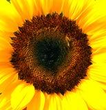 Você é minha luz do sol Foto de Stock Royalty Free