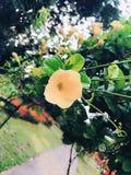 Voc? conhece esta flor foto de stock