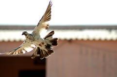 Você já tem as asas, tudo que você tem que fazer deve voar Foto de Stock