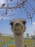Você Lookin em mim?! Foto de Stock Royalty Free
