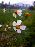 Você sabe sobre estas flores nomeia? fotografia de stock royalty free