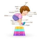 Vocabulary part of body  Royalty Free Stock Photography