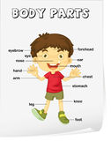 Vocabulary worksheet. Parts of the body Royalty Free Stock Photography