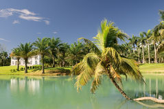 Vocation scenery. With tropical tree with lake under blue sky Stock Images