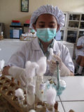 Vocational student. S currently practice in chemical laboratory in the city of Solo, Central Java, Indonesia royalty free stock photo