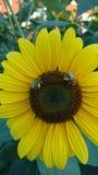 Voces del jardín fotos de archivo libres de regalías