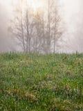 Vochtig gras, de bomen van het zonsopgangsilhouet Stock Foto's