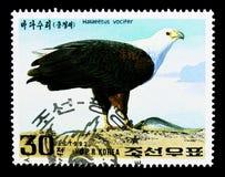 Vocifer för afrikanFisk-Eagle Haliaeetus, internationell stämpelutställning GRANADA - 92: Rovfågelserie, circa 1992 Royaltyfria Foton
