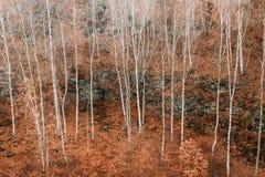 Voderady山毛举材在捷克 库存照片