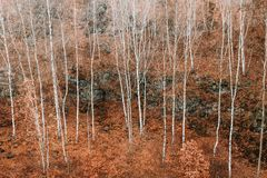 Voderady Beechwood στη Δημοκρατία της Τσεχίας στοκ φωτογραφίες