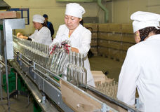 At a vodka distillery. ULAN-UDE, RUSSIA - AUGUST 18: Workers of Baikalfarm, the biggest regional distillery, put empty bottles on a conveyor, August 18, 2010 stock image