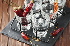 Vodka with hot chili peppers Stock Image