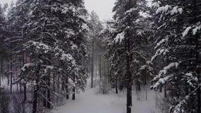 Voe através de um blizzard do pinho filme