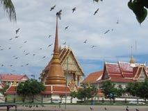 Voed de duiven tegenover de tempel het koninklijke klooster royalty-vrije stock foto