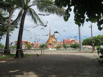 Voed de duiven tegenover de tempel het koninklijke klooster stock foto