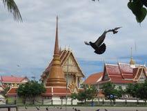 Voed de duiven tegenover de tempel het koninklijke klooster stock foto's